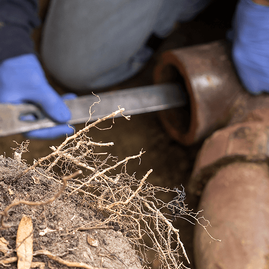 Drain Root Removal